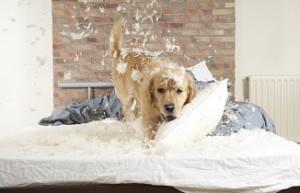 bad-dog-behavior