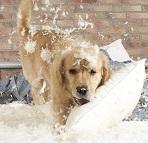 dog-destrutive-behavior-preview