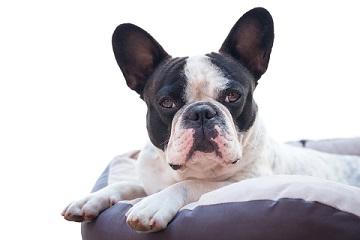 cooling-dog-bed