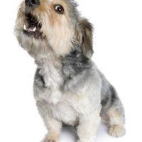 stop-dog-barking