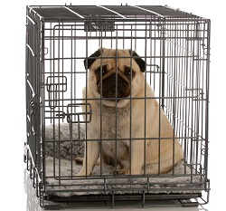 crate-training-puppy