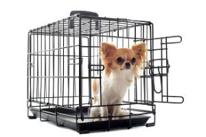 7 Best Dog Crates for Your Best Friend